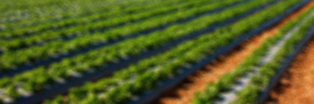 Hvit eller farget folie, strekkfilm, innersekk, sekk til landbruk
